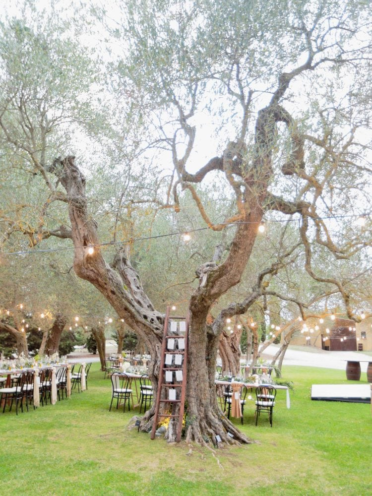 the olive tree and the place order at terre di nano